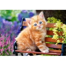 Puzzle Castorland 500 Ginger Kitten