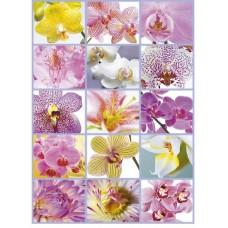 Puzzle Educa 1500 piese Flowers Collage