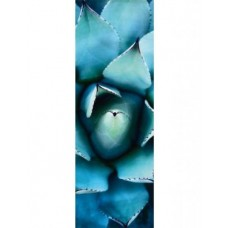 Puzzle Schmidt 1000 Alan Shapiro : Blue echeveria