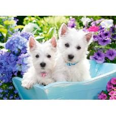 Puzzle Castorland - Westie Puppies 200 piese (222032)