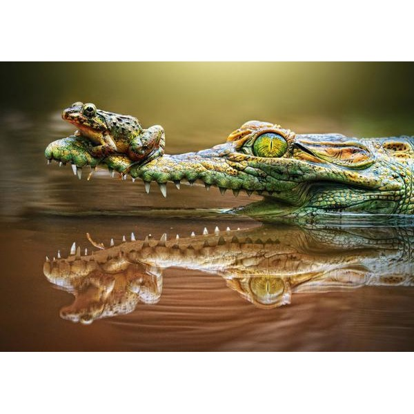 Puzzle Castorland - 500 de piese - The Daredevil Frog