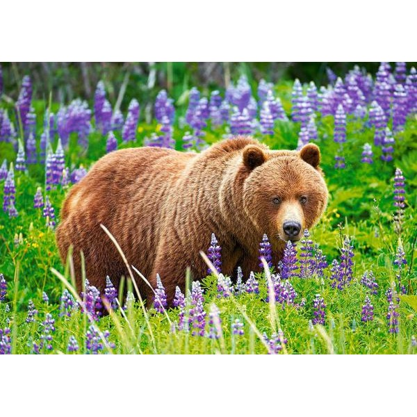 Puzzle Castorland - Bear On The Meadow 500 Piese