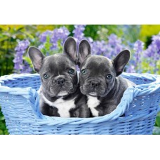 Puzzle Castorland 1000 FRENCH BULLDOG PUPPIES