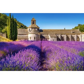 Puzzle Castorland 1000 LAVENDER FIELD IN PROVENCE FRANCE