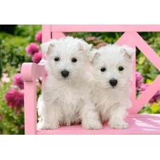 Puzzle Castorland - White Terrier Puppies 1500 piese (151721)