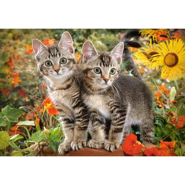 Puzzle Castorland 1500 Kitten budies
