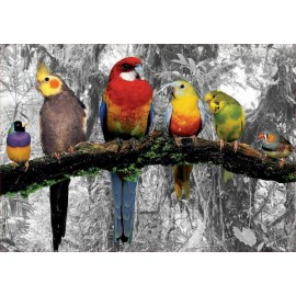 Puzzle Educa - Birds of the Jungle 500 piese