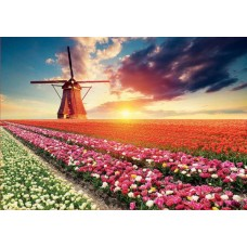 Puzzle Educa - Tulips Landscape 1500 piese