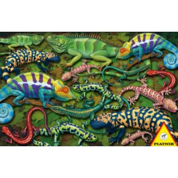 Puzzle Piatnik - 1000 de piese - Salamandre