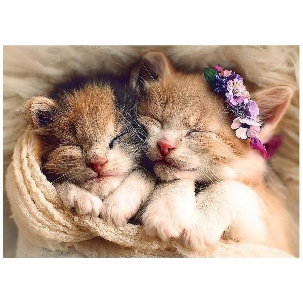 Puzzle Trefl - Sleeping kittens 500 piese (58154)