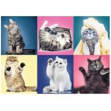 Puzzle Trefl - Pisicute 500 piese